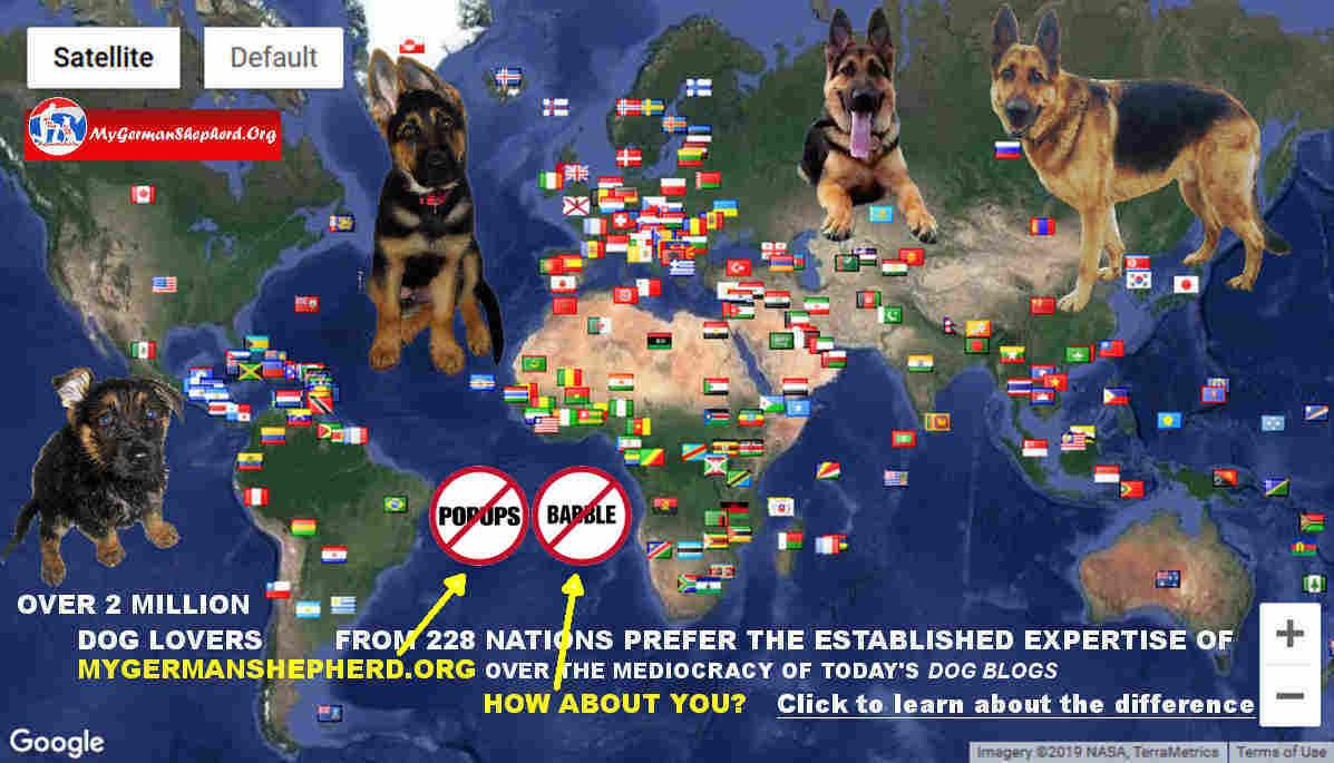 German Shepherd Dog Trainers USA - Cynology Hub: mygsdorg