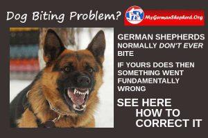 German-Shepherd-biting